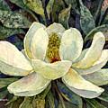 Magnolia Grandiflora by Hailey E Herrera