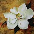 Magnolia Grandiflora by Lorraine Ulen