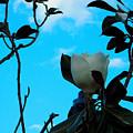 Magnolia by Hayley Ann
