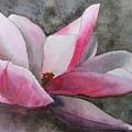Magnolia In Shadow by Shari Monner