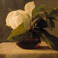 Magnolia by John LaFarge