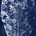 Magnolia Leaf Skeleton by Elspeth Ross