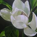 Magnolia Light by Chris Hobel