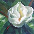 Magnolia by Marta Styk