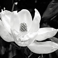 Magnolia Memories 3- By Linda Woods by Linda Woods