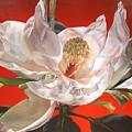 Magnolia by Muriel Dolemieux