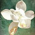Magnolia Pieces by Alice Gipson