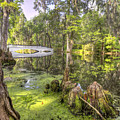 Magnolia Plantation Bridge Cypress Garden by Dustin K Ryan