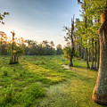 Magnolia Plantation Cypress Swamp Sunrise by Dustin K Ryan