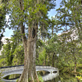 Magnolia Plantation Cypress Tree by Dustin K Ryan