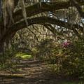 Magnolia Plantation by Jeff Shumaker