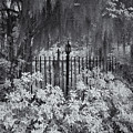 Magnolia Plantation Lightpost by Cindy Archbell