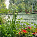 Magnolia Plantation Swamp Garden by Dustin K Ryan