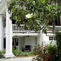 Magnolia Plantation by Timothy Morris