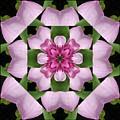 Magnolia  by Rhoda Gerig