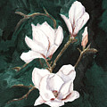 Magnolia Soulangeana by Arlene  Wright-Correll