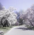 Magnolia Time New York Botanical Garden by Julie Palencia