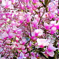 Magnolia Tree Beauty #1 by Ed Weidman