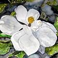 Magnolia Tree Flower by Derek Mccrea