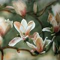 Magnolias In Bloom by Maryann Boysen