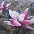 Magnolias In Shadow by Shari Monner