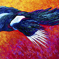 Magpie In Flight by Marion Rose