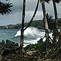 Mahama Lauhala Keanae Peninsula Maui Hawaii by Sharon Mau