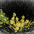 Mahonia Blossom by Thomas Fields