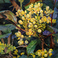 Mahonia Morning  by Craig Gallaway