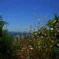 Maidenhair Ferns And Grasses On The Bluff by Eve Paludan