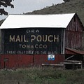 Mail Pouch Tobacco Barn by Wendy Gertz