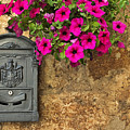 Mailbox With Petunias by Silvia Ganora