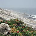 maine 13 Pemaquid Lighthouse Shoreline Before Storm by Terri Winkler