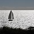 maine 44 Sailboat by Terri Winkler