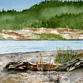 Maine Beach Wood by Brenda Owen
