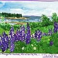 Maine Coast Purple Lupine Art by Catinka Knoth