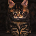 Maine Coon Kitty by Sabine Lackner
