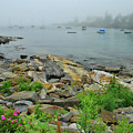 Maine Cove by Allen Beatty