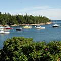 Maine Cove by David Campione