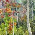Maine Fall by Judy Coggin