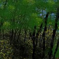 Maine Forest by Bill Minkowitz