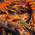 Maine Lobsters by Robin Zygelman