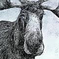 Maine Moose by AnneMarie Welsh