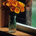Maine Windowsill by Laurie Paci