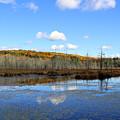 Maine's Beauty by Cheryl Aguiar