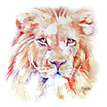 Majestic African Lion by Stephie Butler