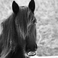 Majestic Beauty Bw by Cathy Beharriell
