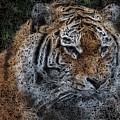 Majestic Bengal Tiger by Jon Bullman