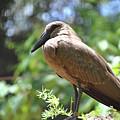Majestic Bird by Gabrielle Yap