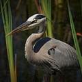 Majestic Bird by Pamela Blizzard